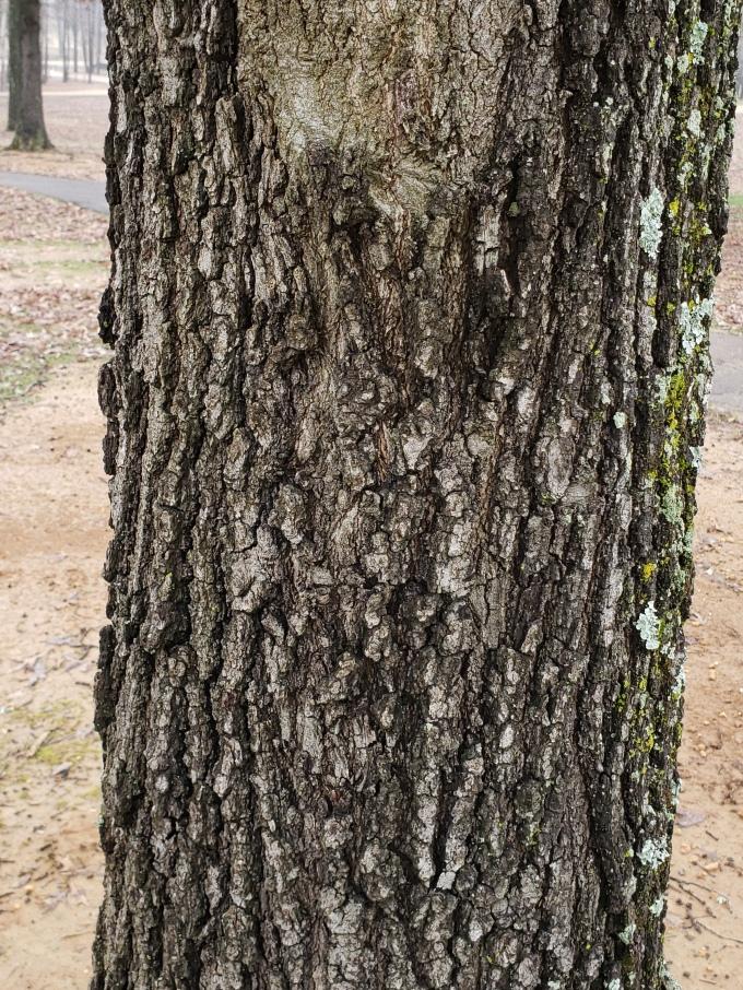 oak 2 bark 2
