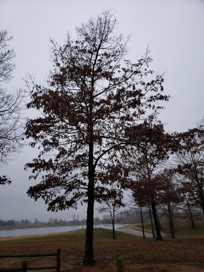 oak 2 habit